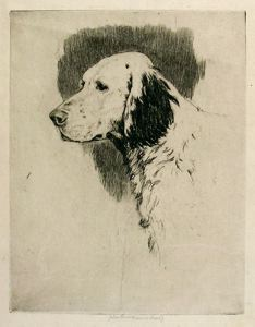 Image of Head of Setter