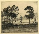 Image of Southern Pines