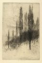 Image of Poplars, Morningside Park (No. 1)