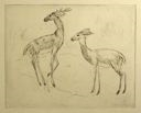 Image of Stag and Doe (No. 1)