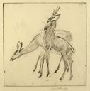 Image of Stag and Doe (No. 2)