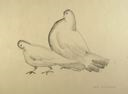 Image of Study for Pigeons (Cock And Hen)