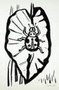 Image of Lady Bug